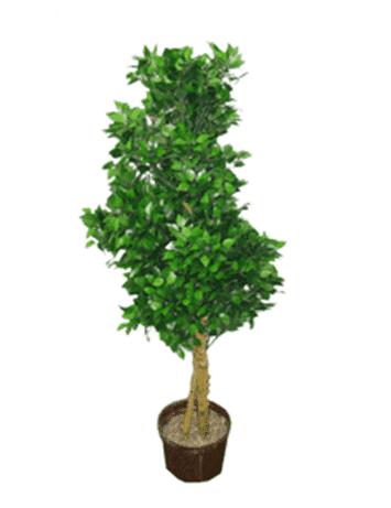 Дерево 14266 (Н-100см)