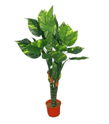 Дерево 16198 (Н-132см)