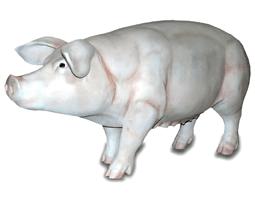 Свинка 17.30 (длина 160см)