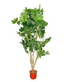 Дерево 16179 (Н-184см)