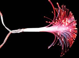 Электрогирлянда цвет: мульти DN-39052